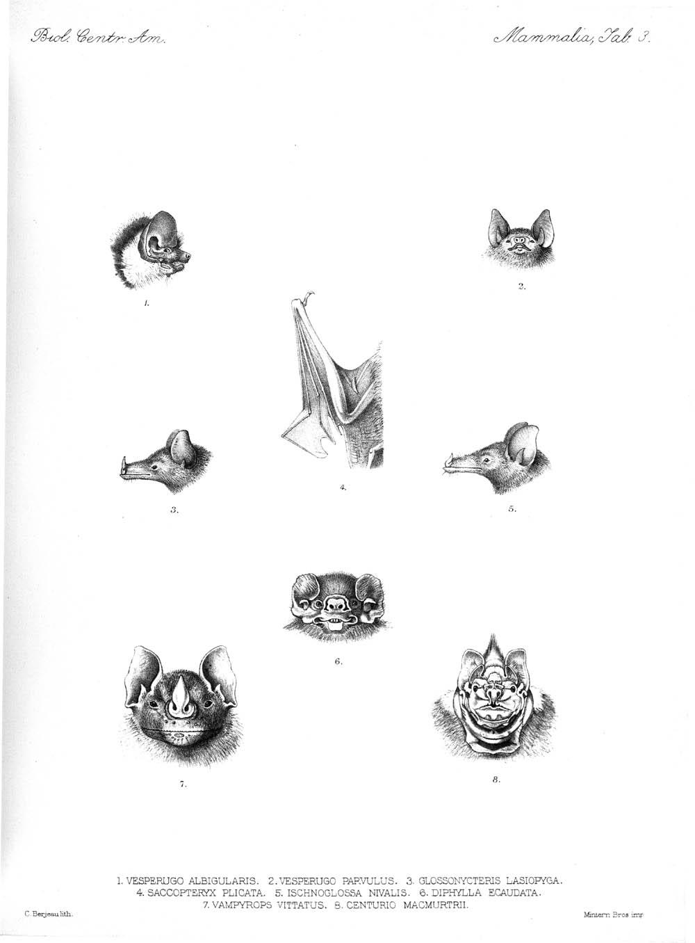 Bats,  Image number:bca_02_00_00_253