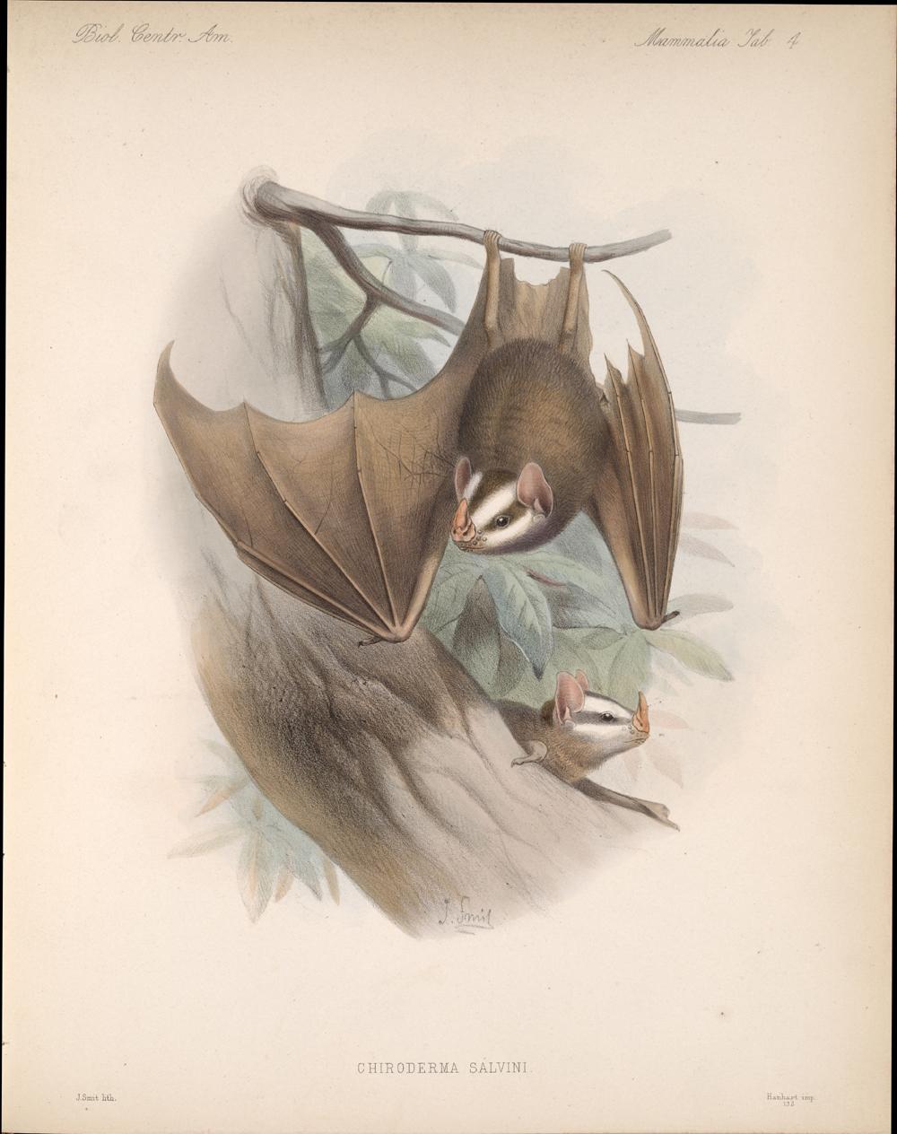 Bats,  Image number:bca_02_00_00_255
