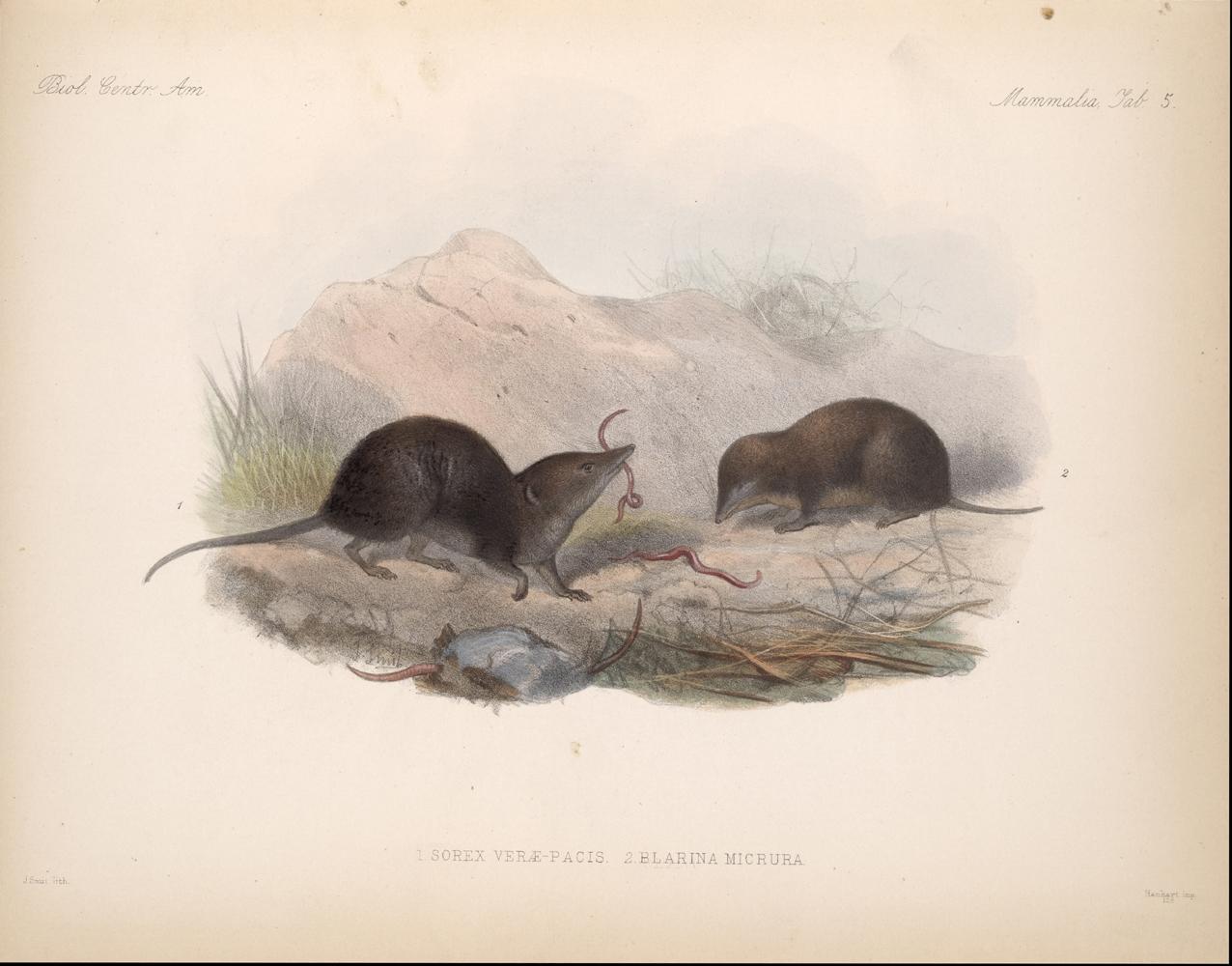 Mammals,  Image number:bca_02_00_00_257
