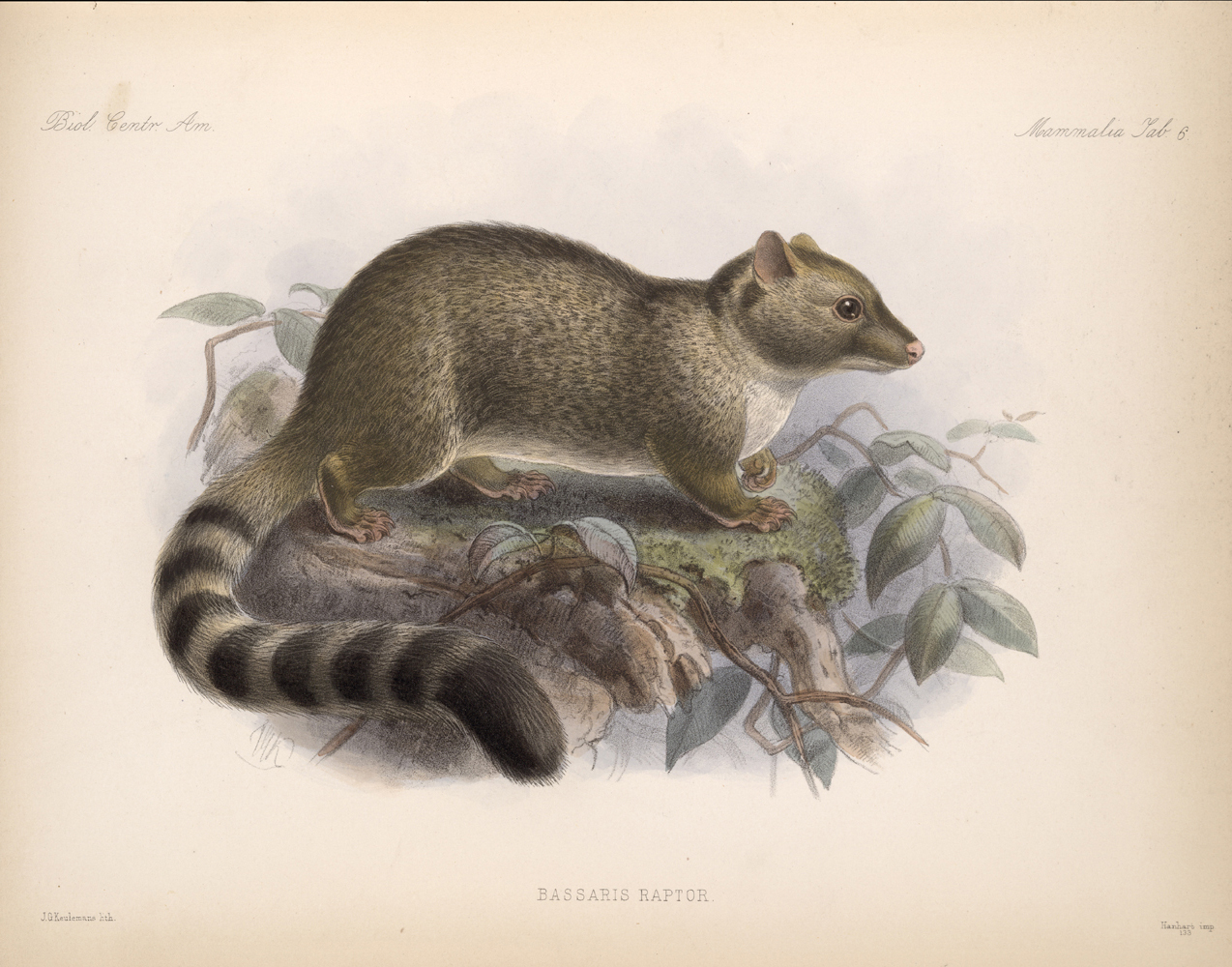 Mammals,  Image number:bca_02_00_00_259