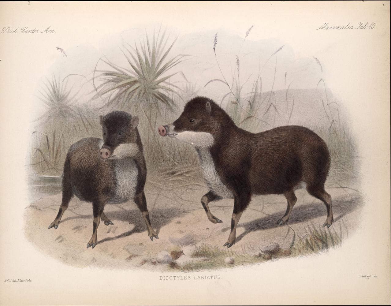 Mammals,  Image number:bca_02_00_00_267