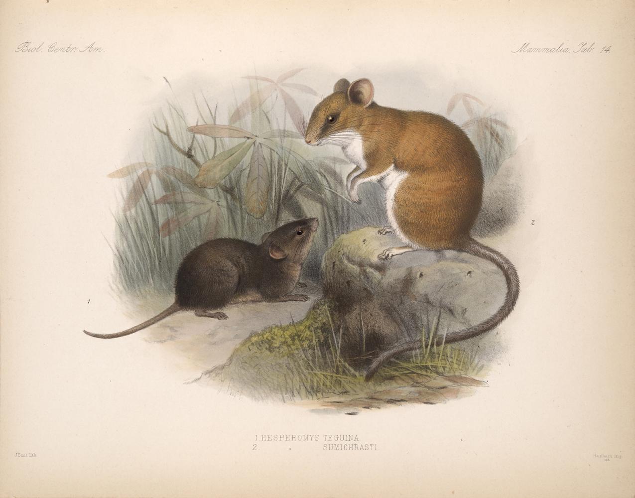 Mammals,  Image number:bca_02_00_00_275