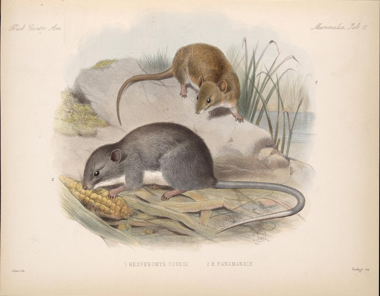 Mammals,  Image number:bca_02_00_00_277