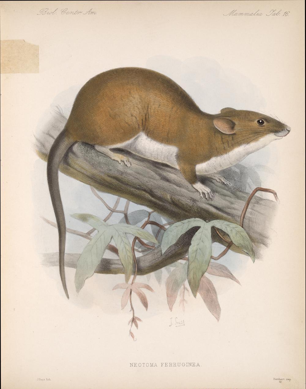Mammals,  Image number:bca_02_00_00_279