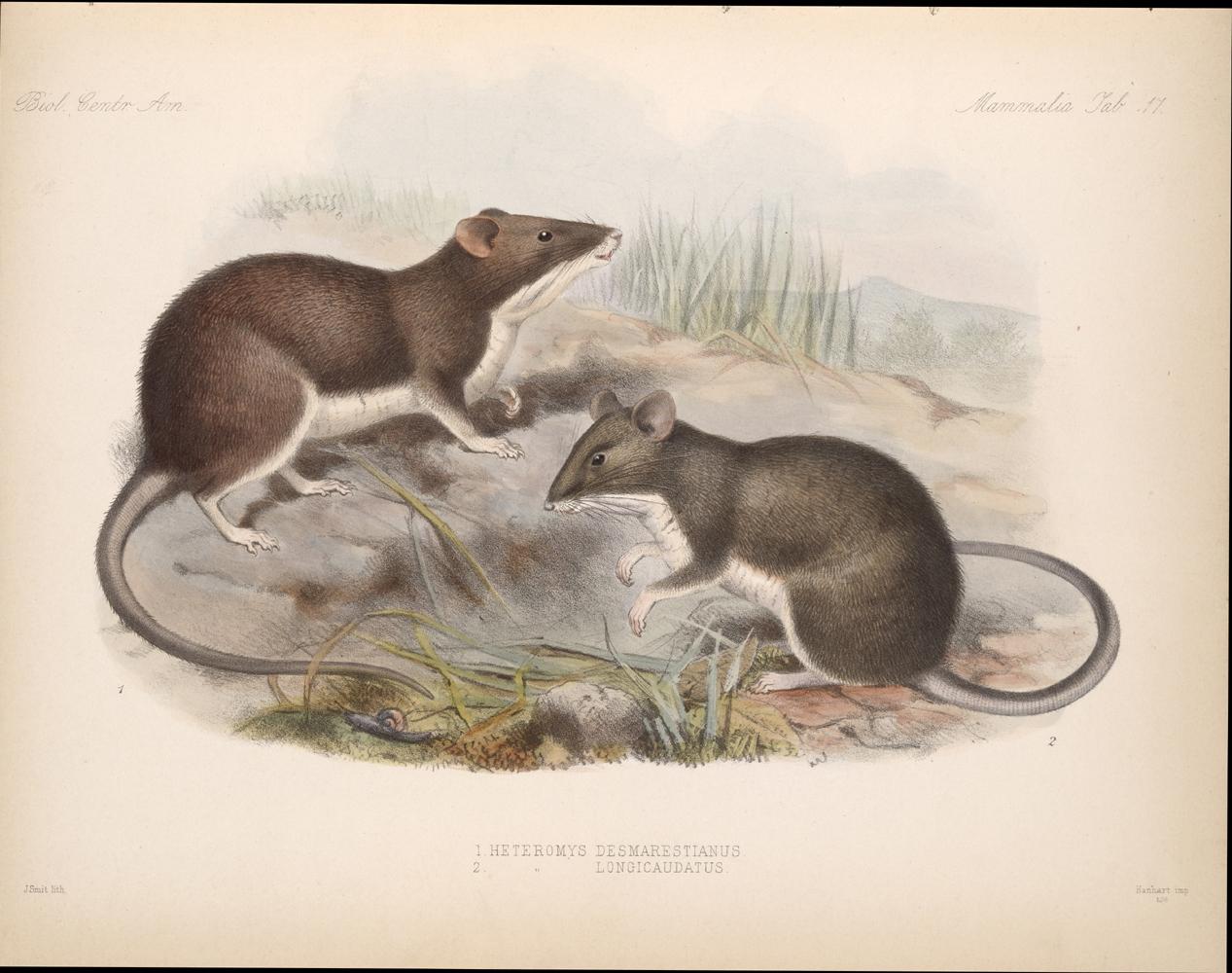 Mammals,  Image number:bca_02_00_00_281