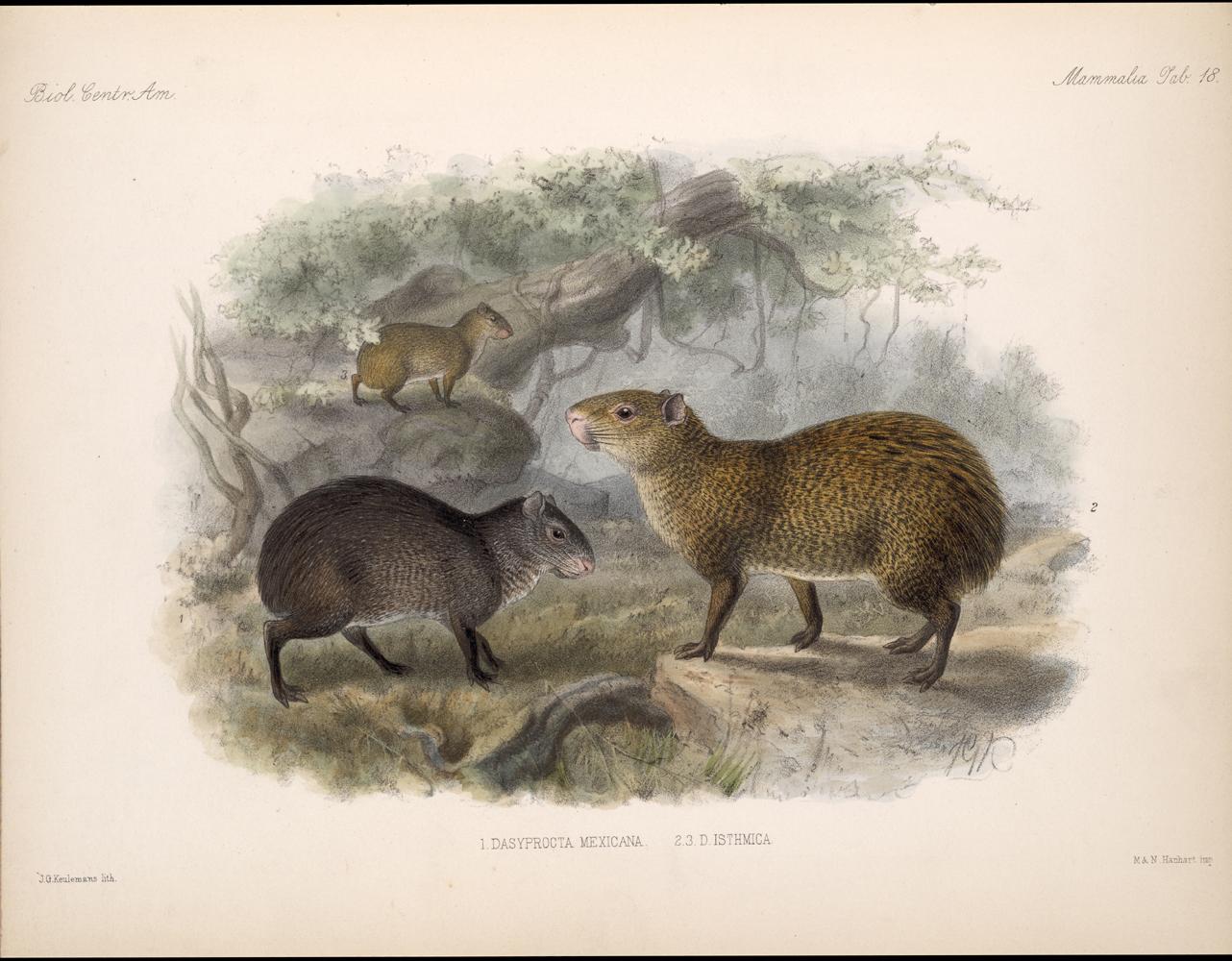 Mammals,  Image number:bca_02_00_00_283