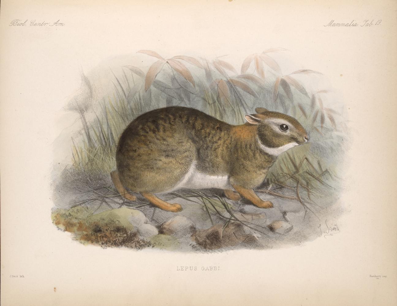 Mammals,  Image number:bca_02_00_00_285