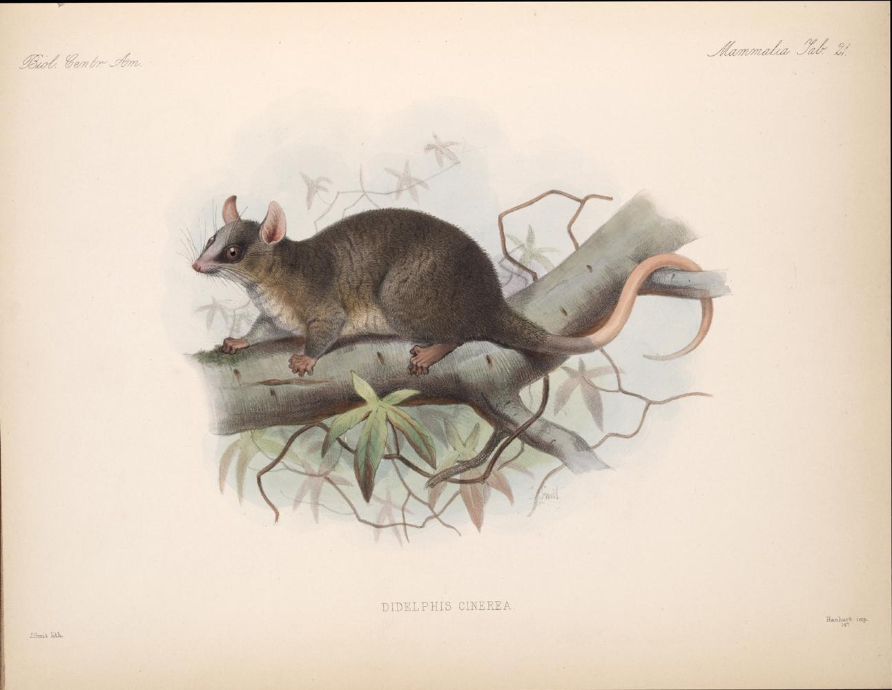 Mammals,  Image number:bca_02_00_00_289