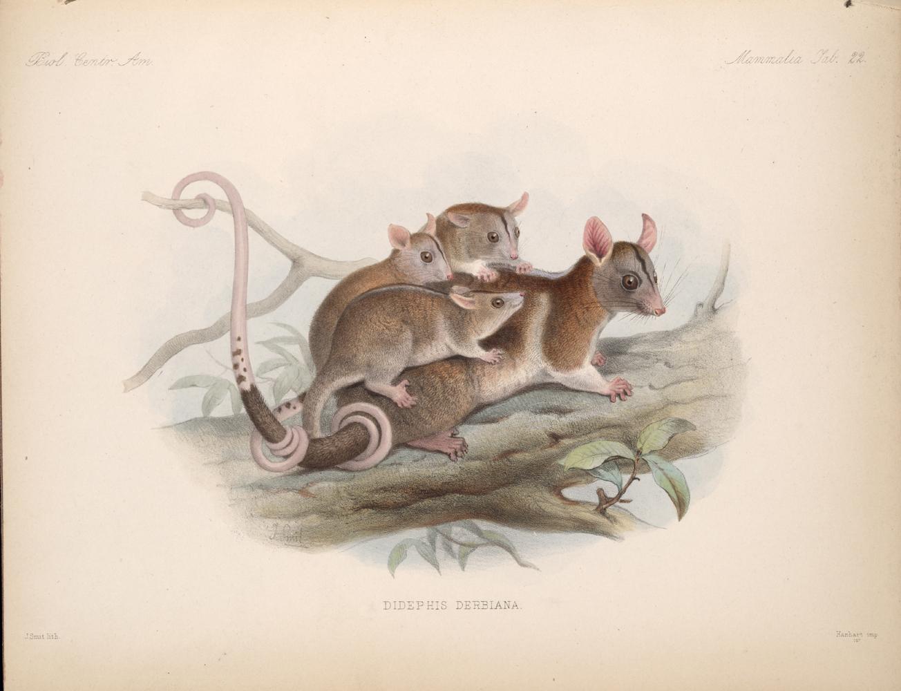 Mammals,  Image number:bca_02_00_00_291