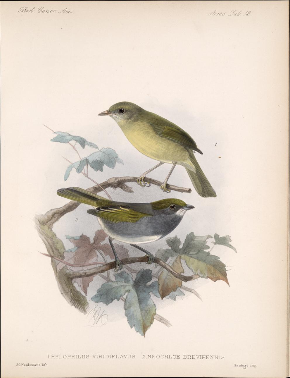 Birds,  Image number:bca_03_04_00_039