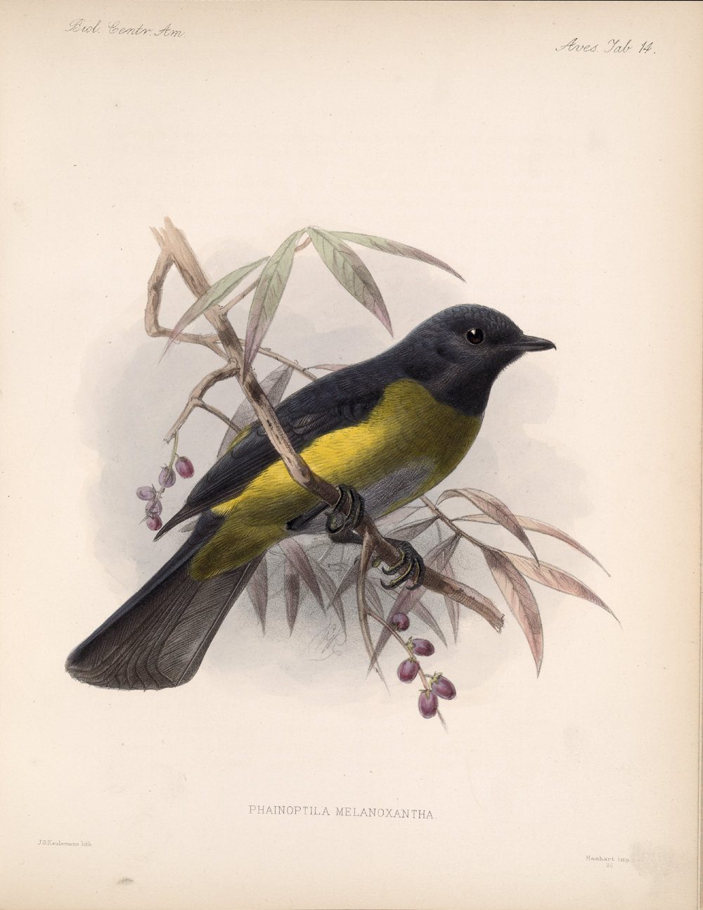 Birds,  Image number:bca_03_04_00_041