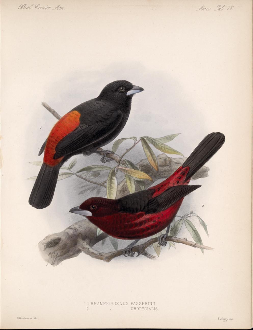Birds,  Image number:bca_03_04_00_051