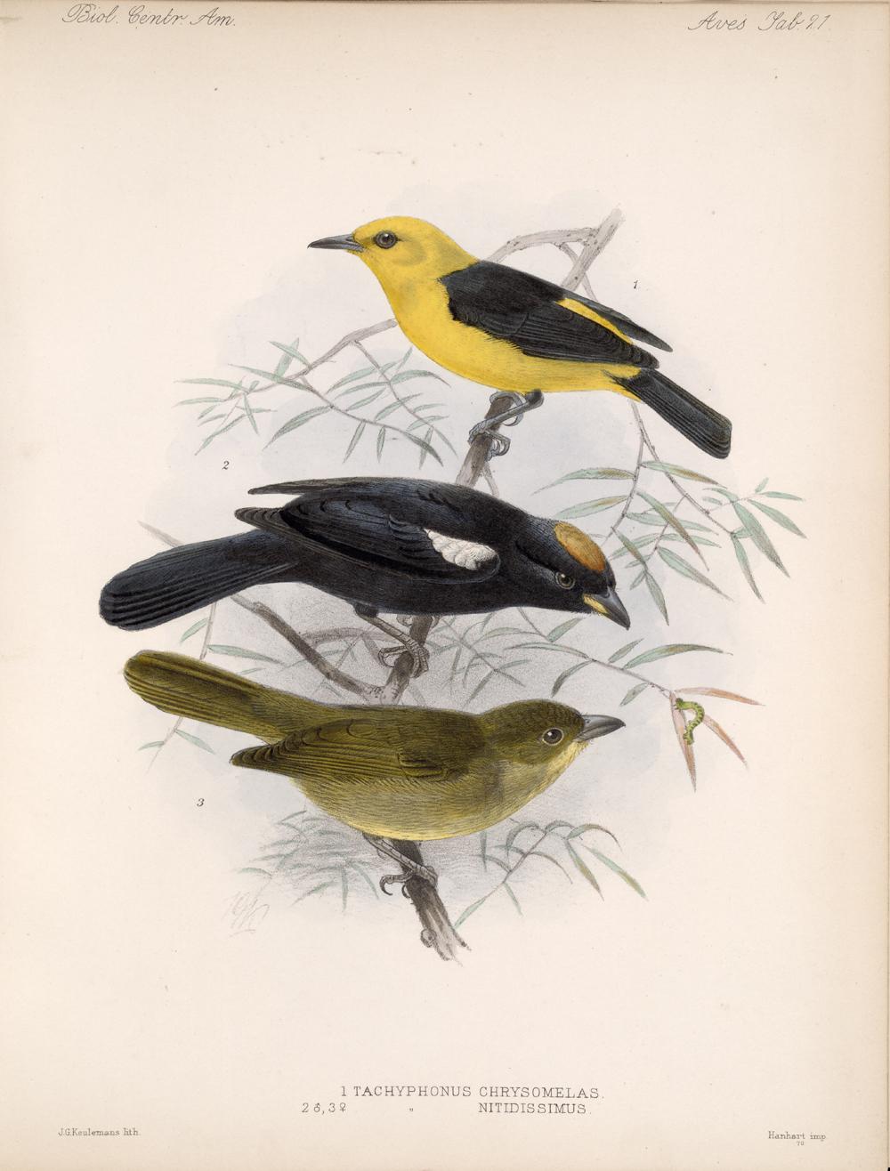 Birds,  Image number:bca_03_04_00_057