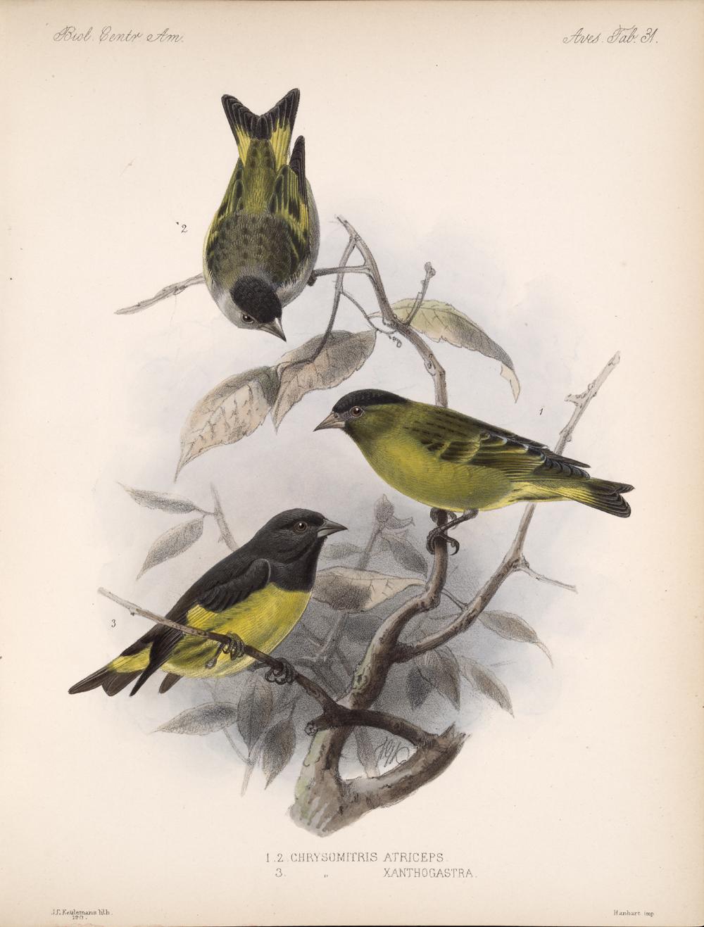 Birds,  Image number:bca_03_04_00_077