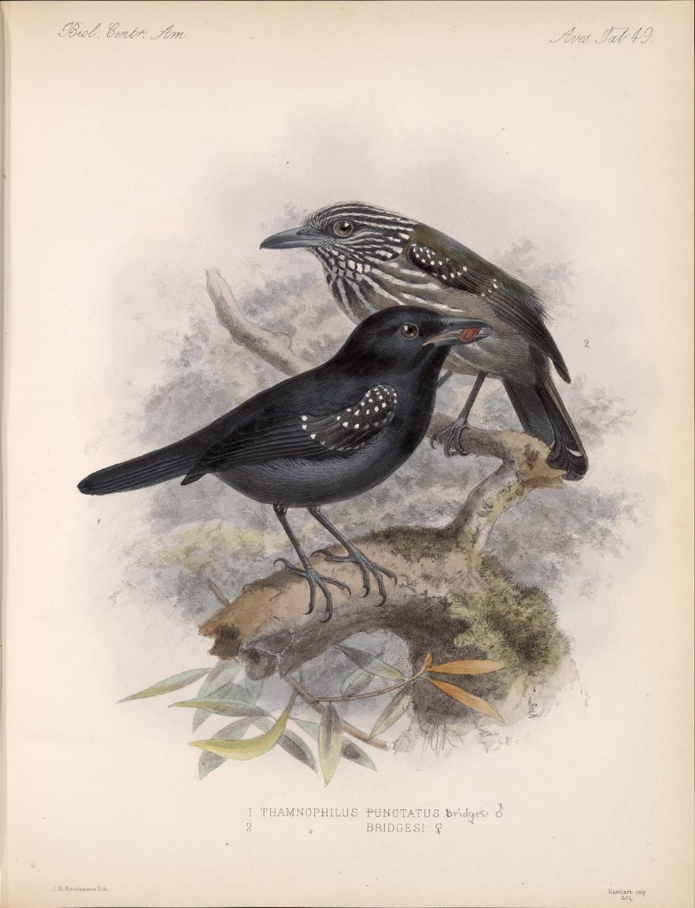 Birds,  Image number:bca_03_04_00_113