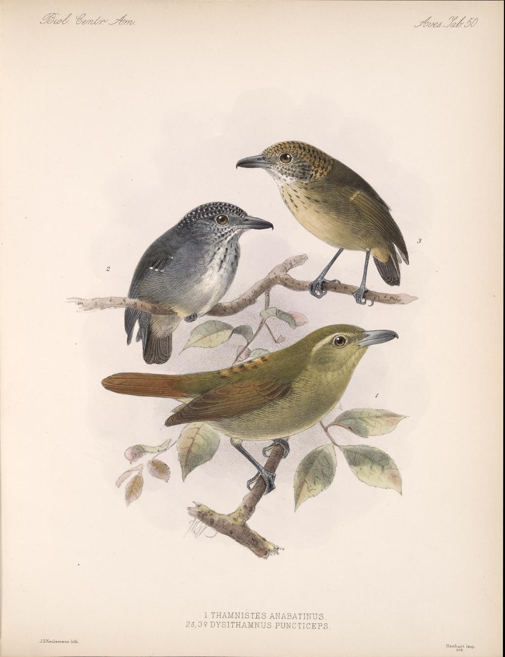Birds,  Image number:bca_03_04_00_115