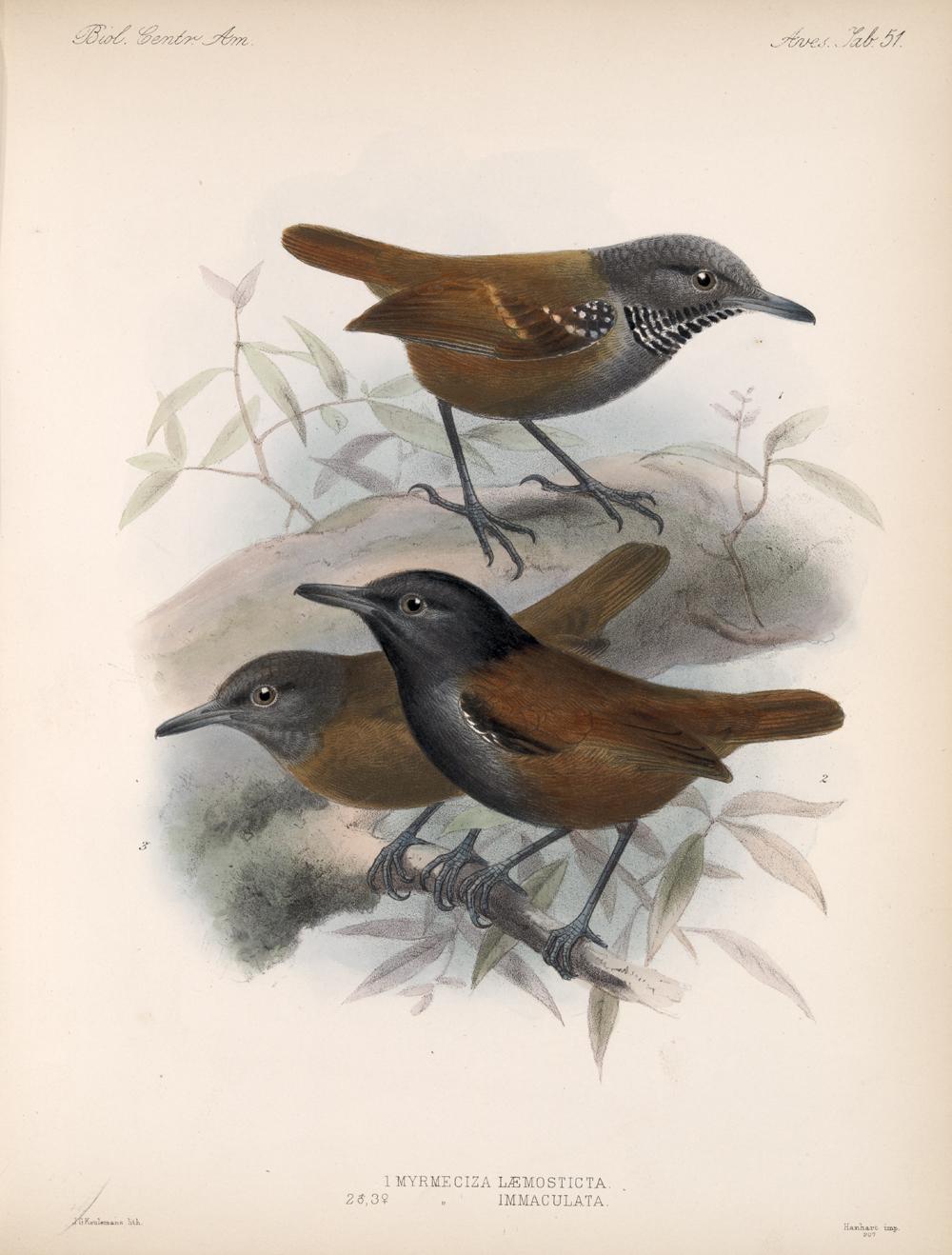 Birds,  Image number:bca_03_04_00_117
