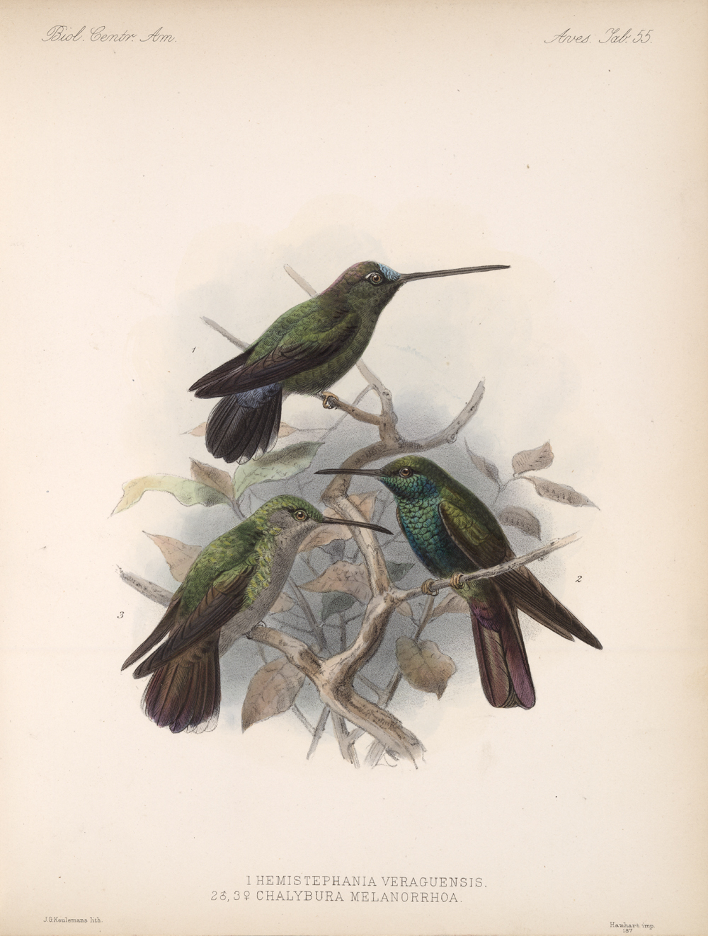 Birds,  Image number:bca_03_04_00_127