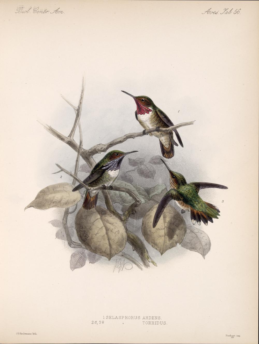 Birds,  Image number:bca_03_04_00_129