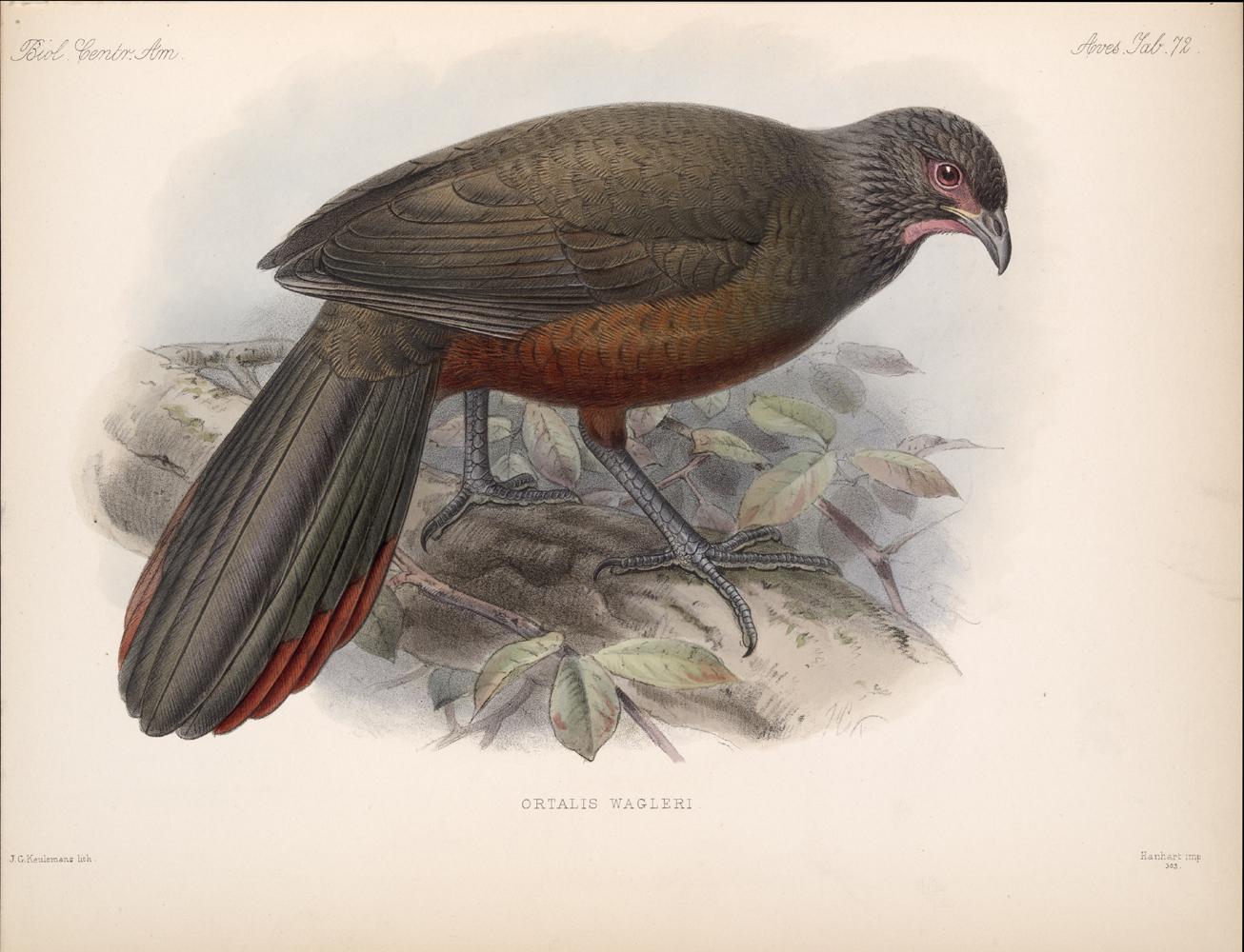 Birds,  Image number:bca_03_04_00_167