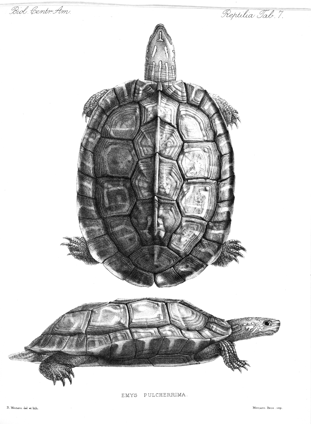 Turtles,  Image number:bca_04_00_00_357