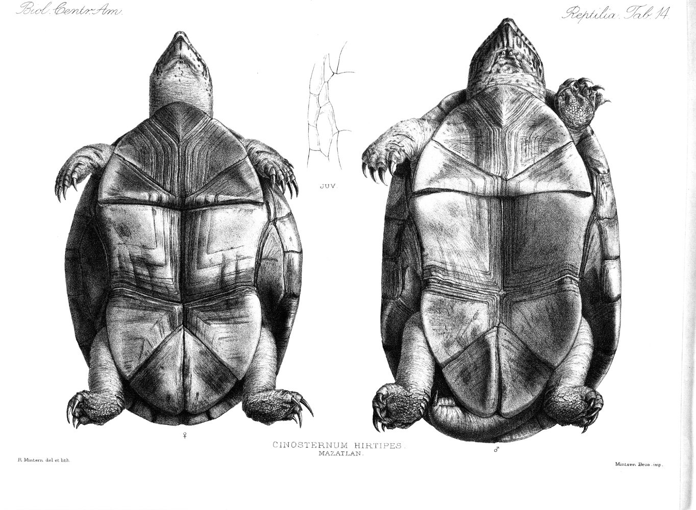 Turtles,  Image number:bca_04_00_00_364