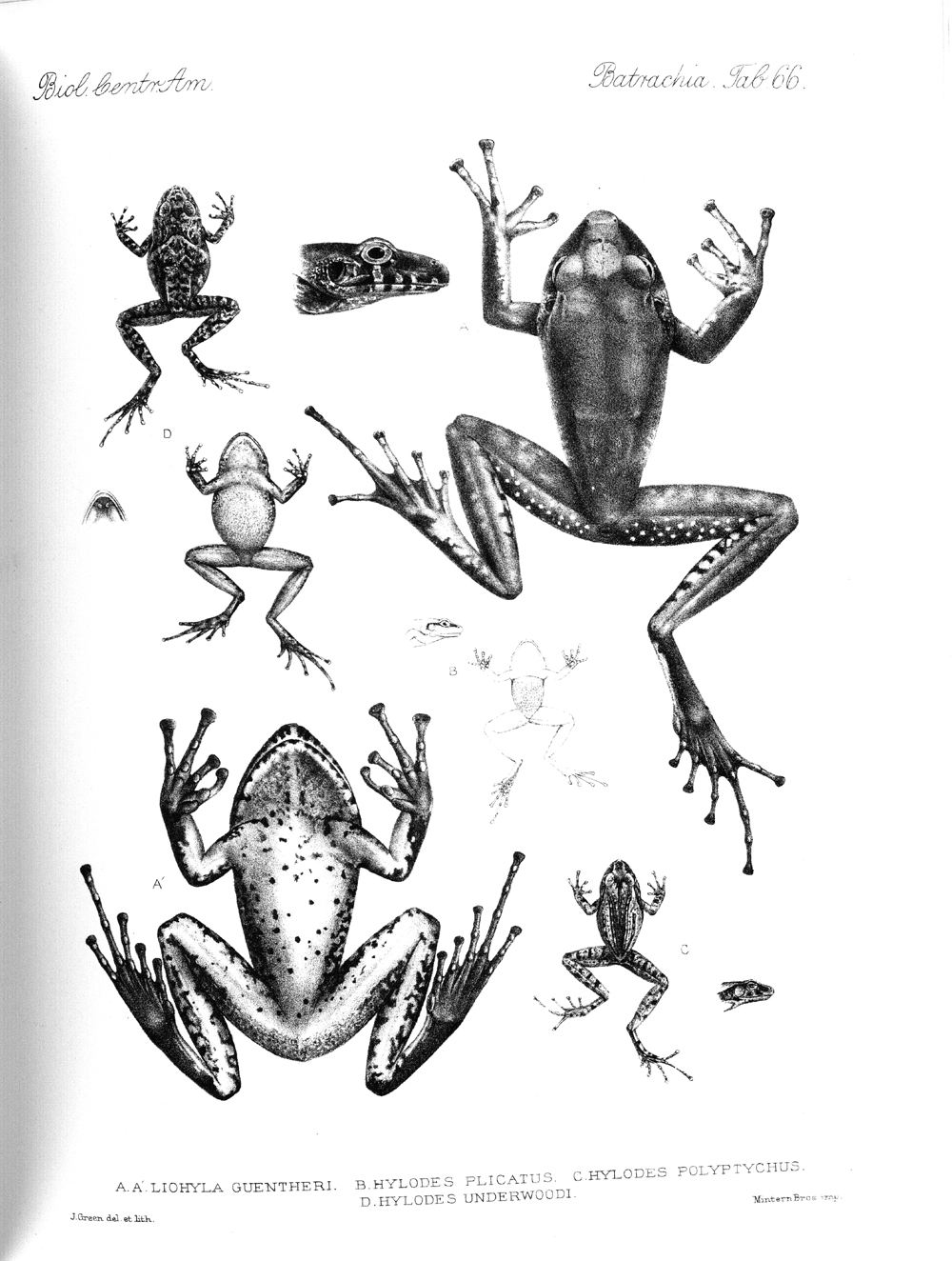 Frogs,  Image number:bca_04_00_00_416