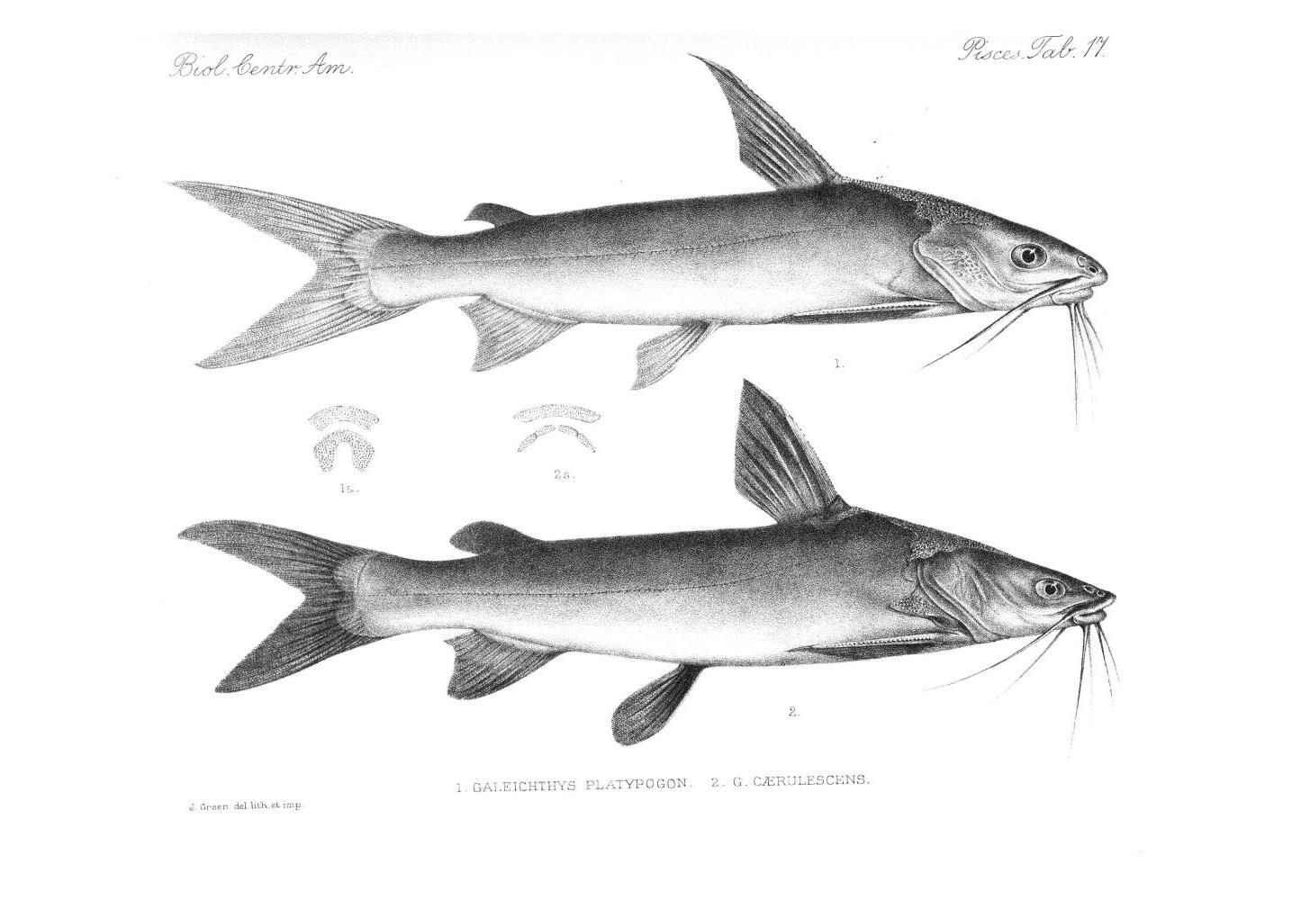 Fish,  Image number:bca_05_00_00_277