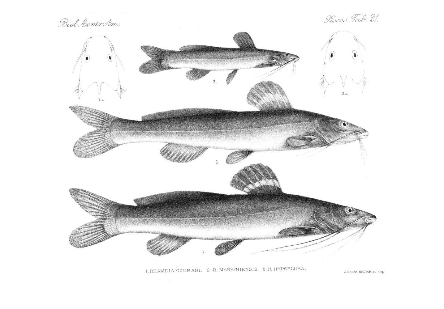 Fish,  Image number:bca_05_00_00_285