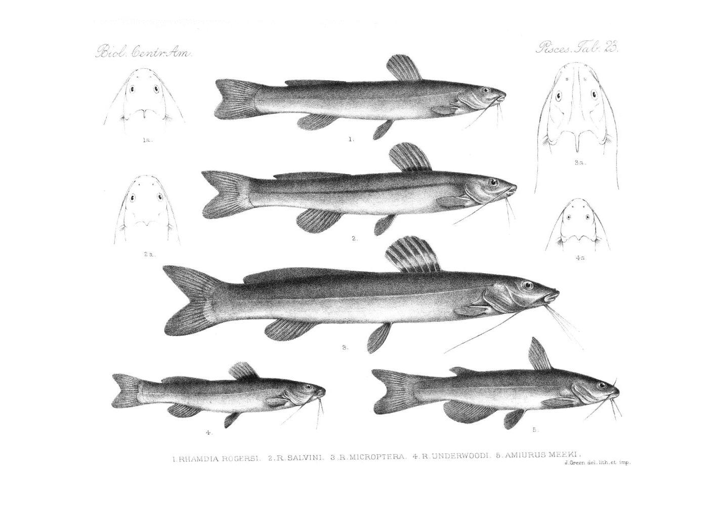Fish,  Image number:bca_05_00_00_289