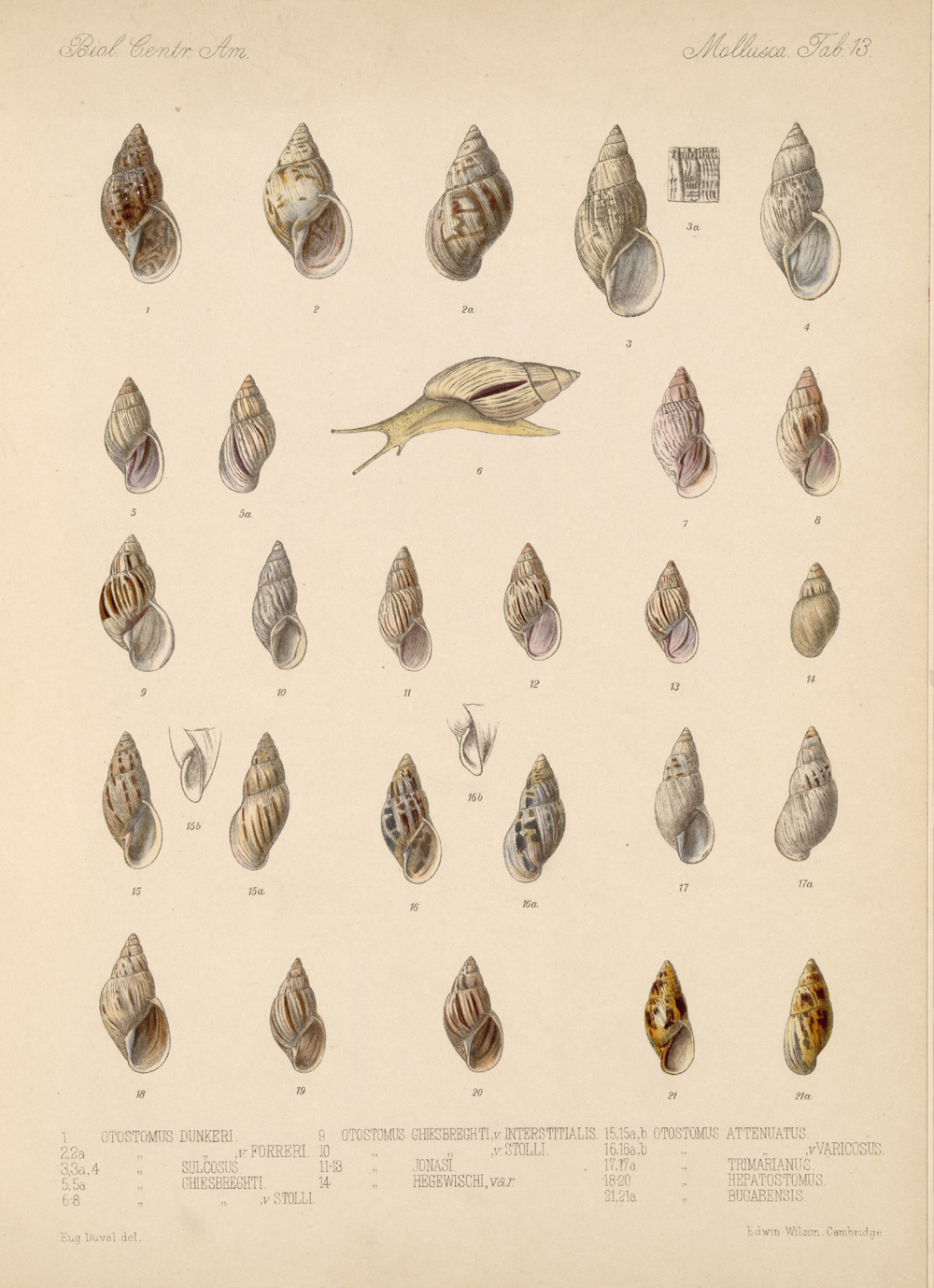Shells and Mollusks,  Image number:bca_06_00_00_735