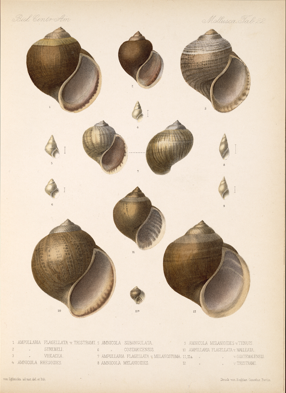 Shells and Mollusks,  Image number:bca_06_00_00_753