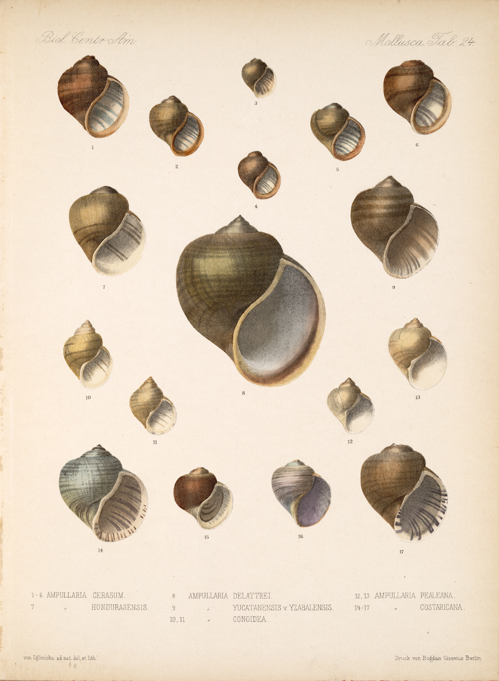 Shells and Mollusks,  Image number:bca_06_00_00_757
