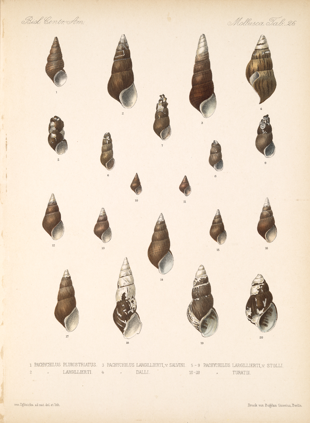 Shells and Mollusks,  Image number:bca_06_00_00_761