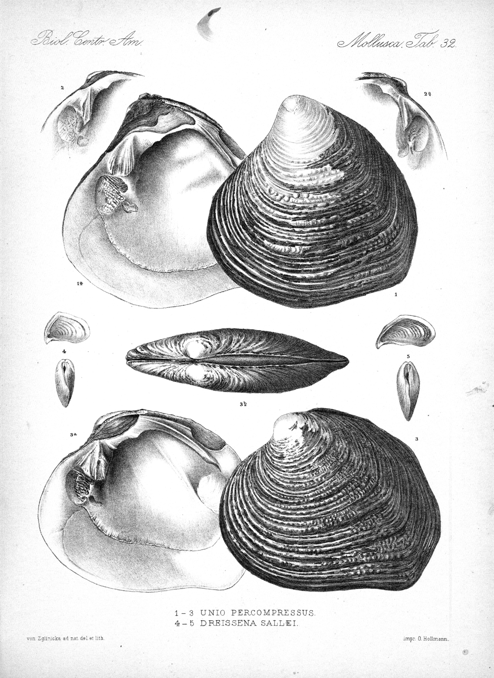 Shells and Mollusks,  Image number:bca_06_00_00_773
