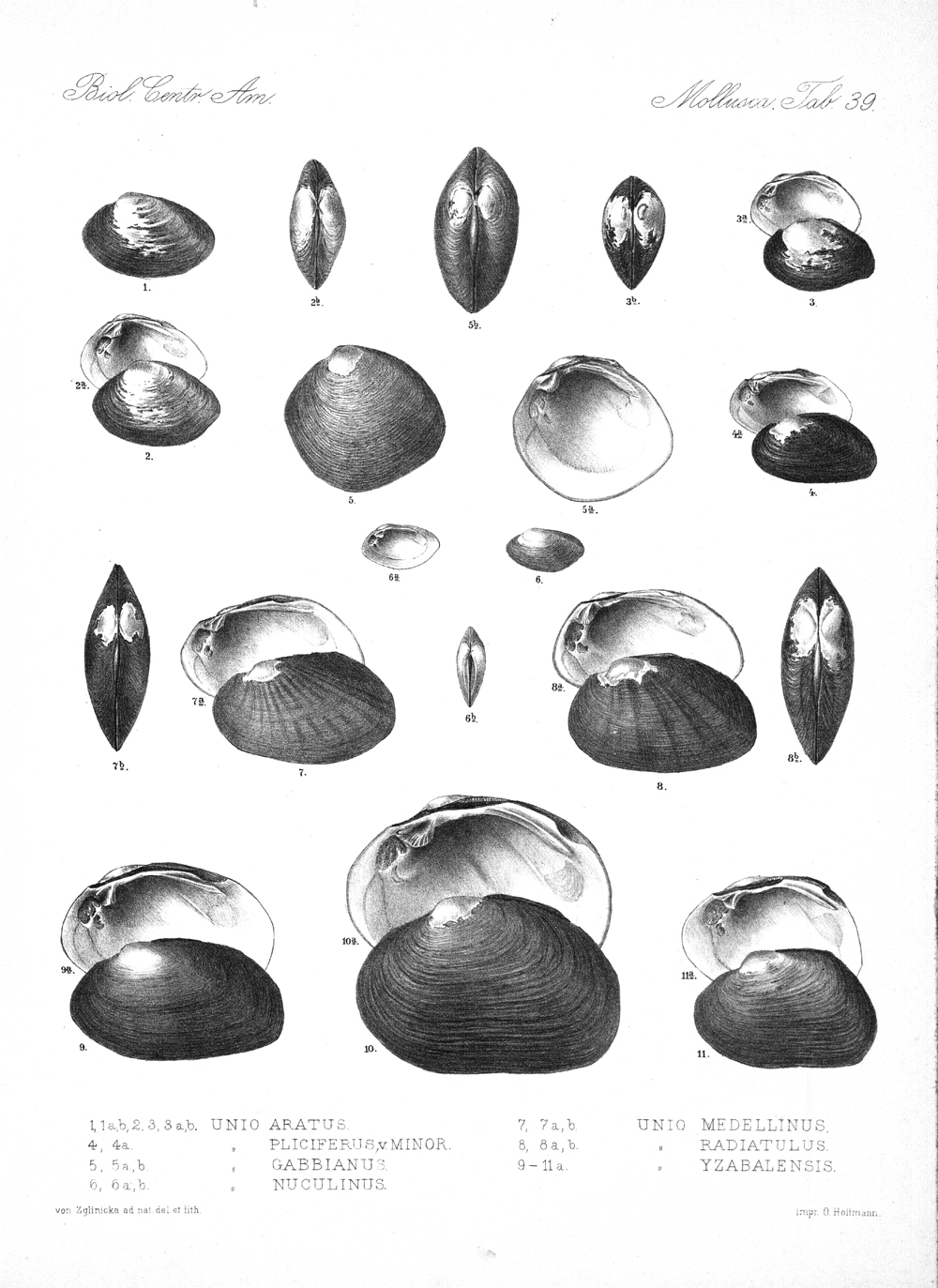 Shells and Mollusks,  Image number:bca_06_00_00_787