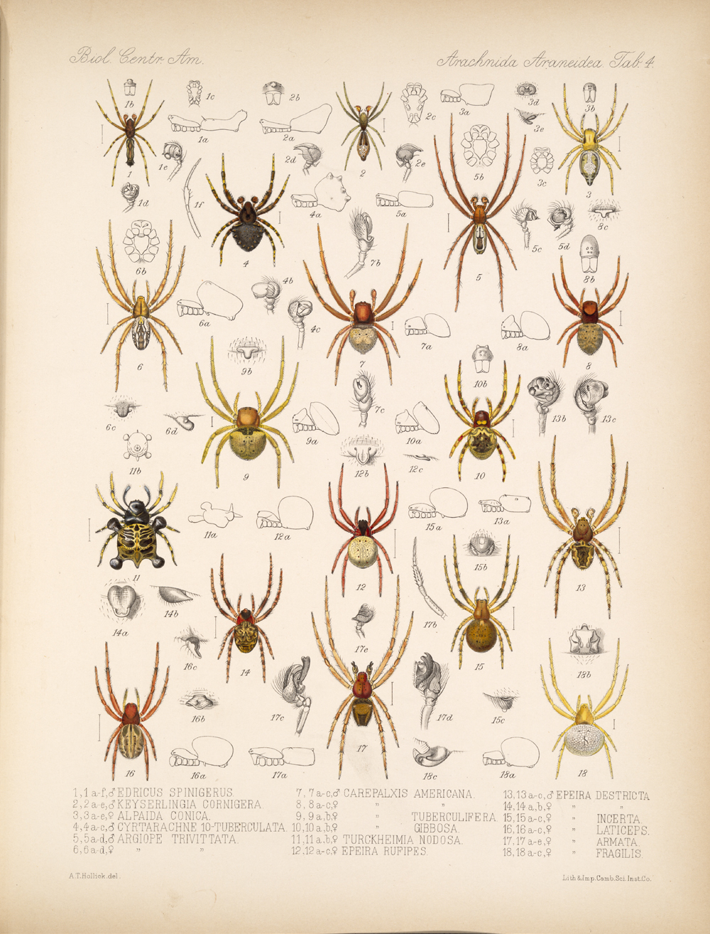 Spiders and Scorpions,  Image number:bca_07_00_00_357