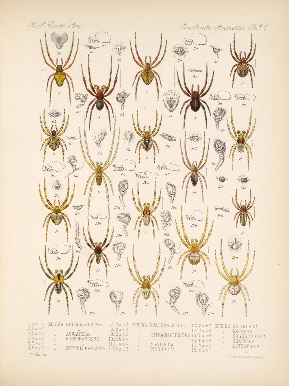 Spiders and Scorpions,  Image number:bca_07_00_00_369