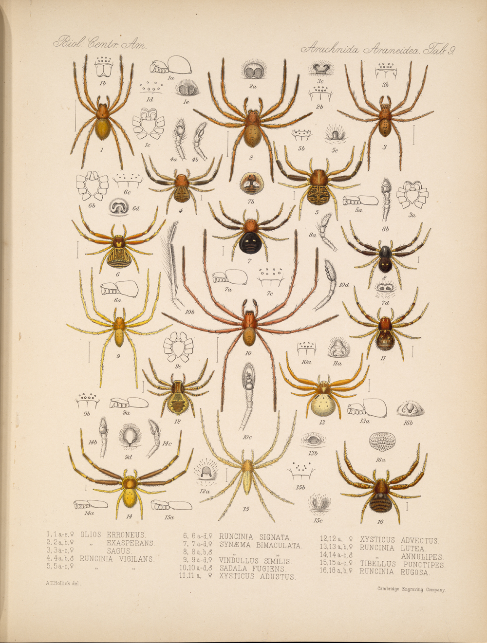 Spiders and Scorpions,  Image number:bca_07_00_00_377