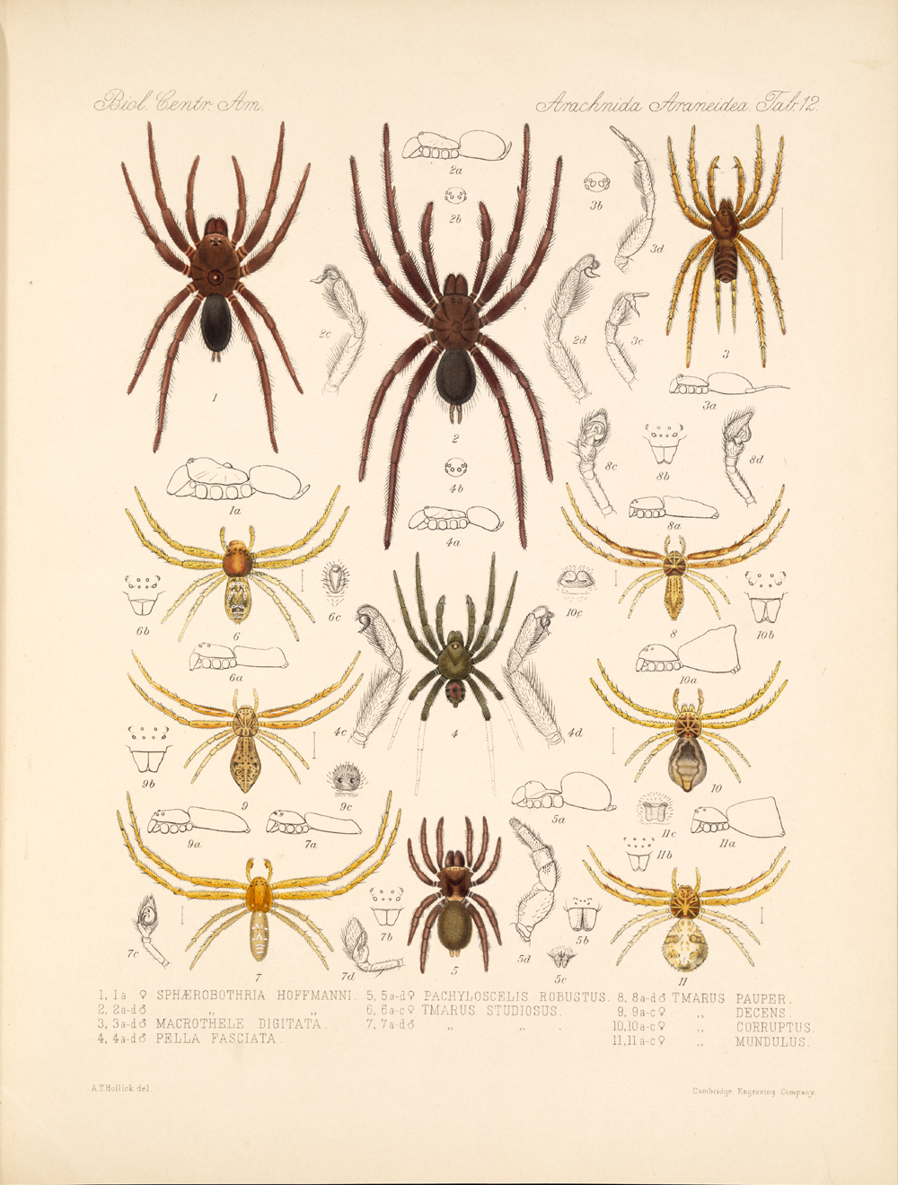 Spiders and Scorpions,  Image number:bca_07_00_00_389
