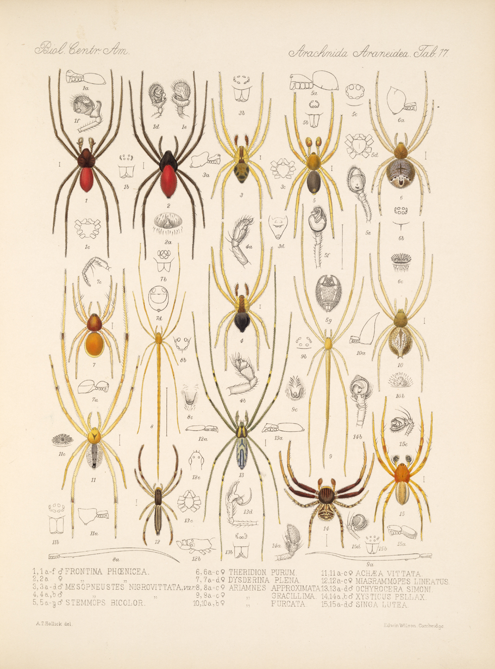 Spiders and Scorpions,  Image number:bca_07_00_00_409