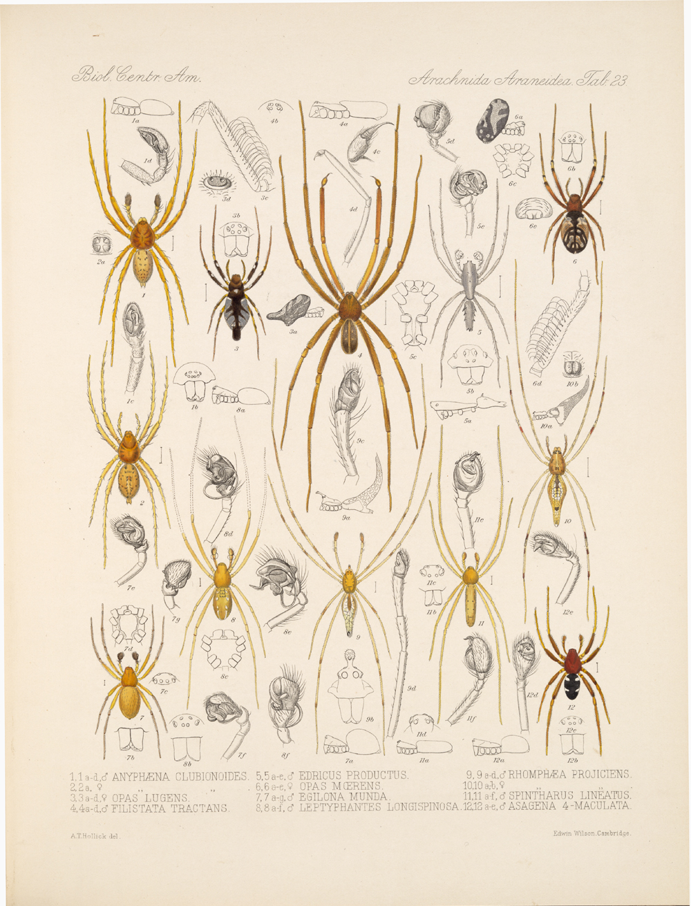 Spiders and Scorpions,  Image number:bca_07_00_00_433