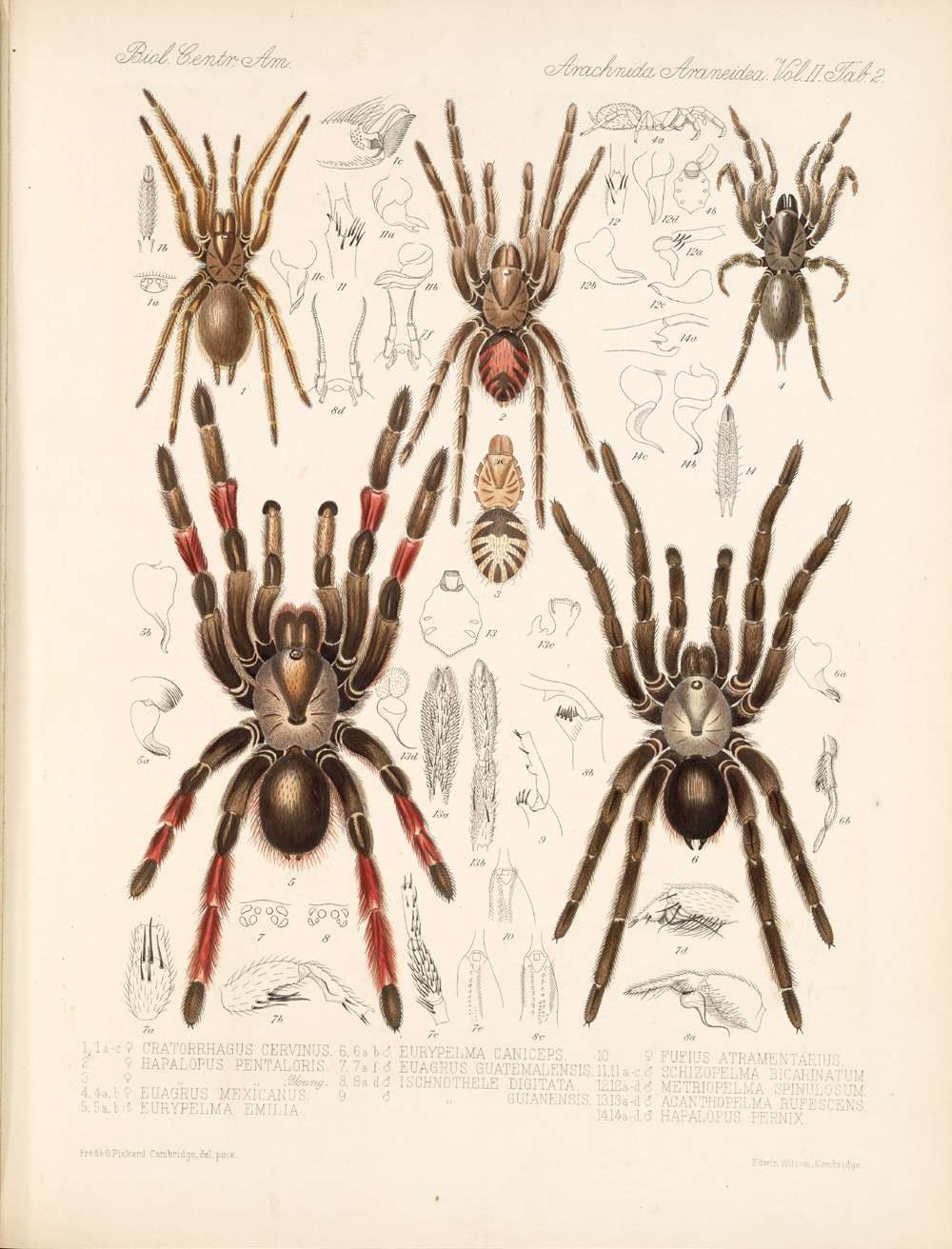 Spiders and Scorpions,  Image number:bca_08_00_00_628