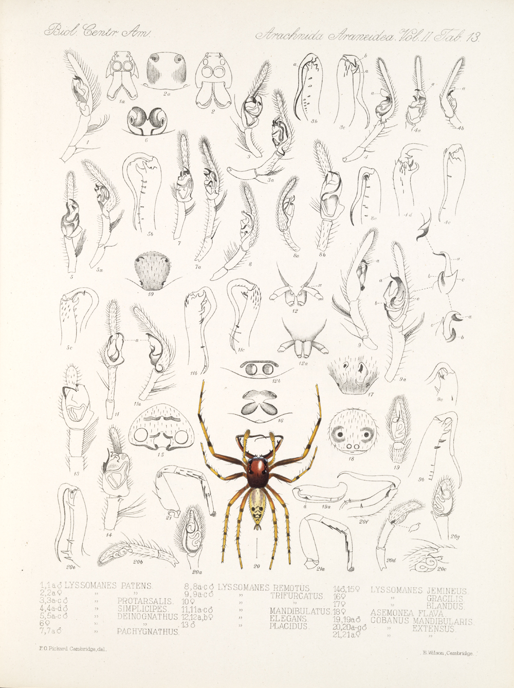 Spiders and Scorpions,  Image number:bca_08_00_00_650
