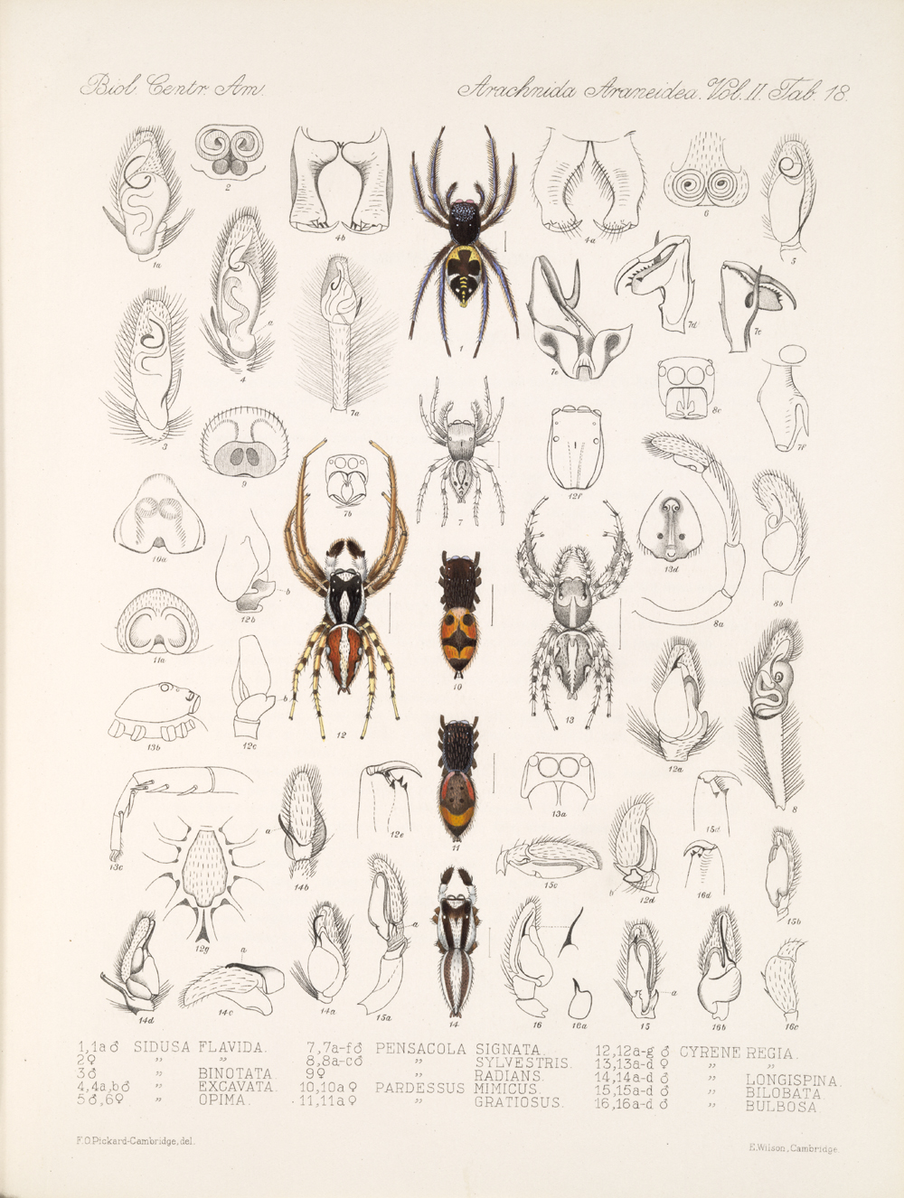 Spiders and Scorpions,  Image number:bca_08_00_00_660