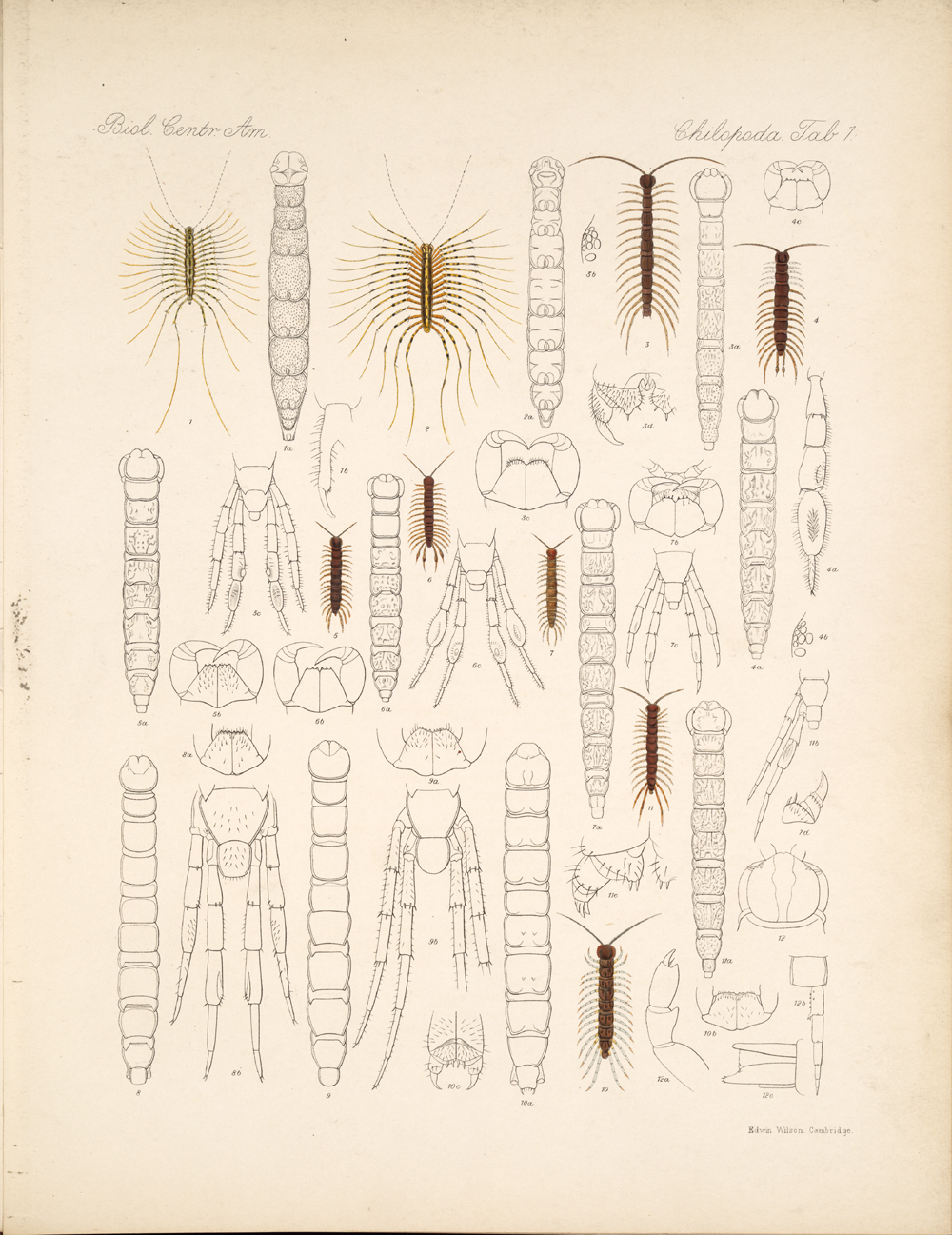 Centipedes and Millipedes,  Image number:bca_11_00_00_228