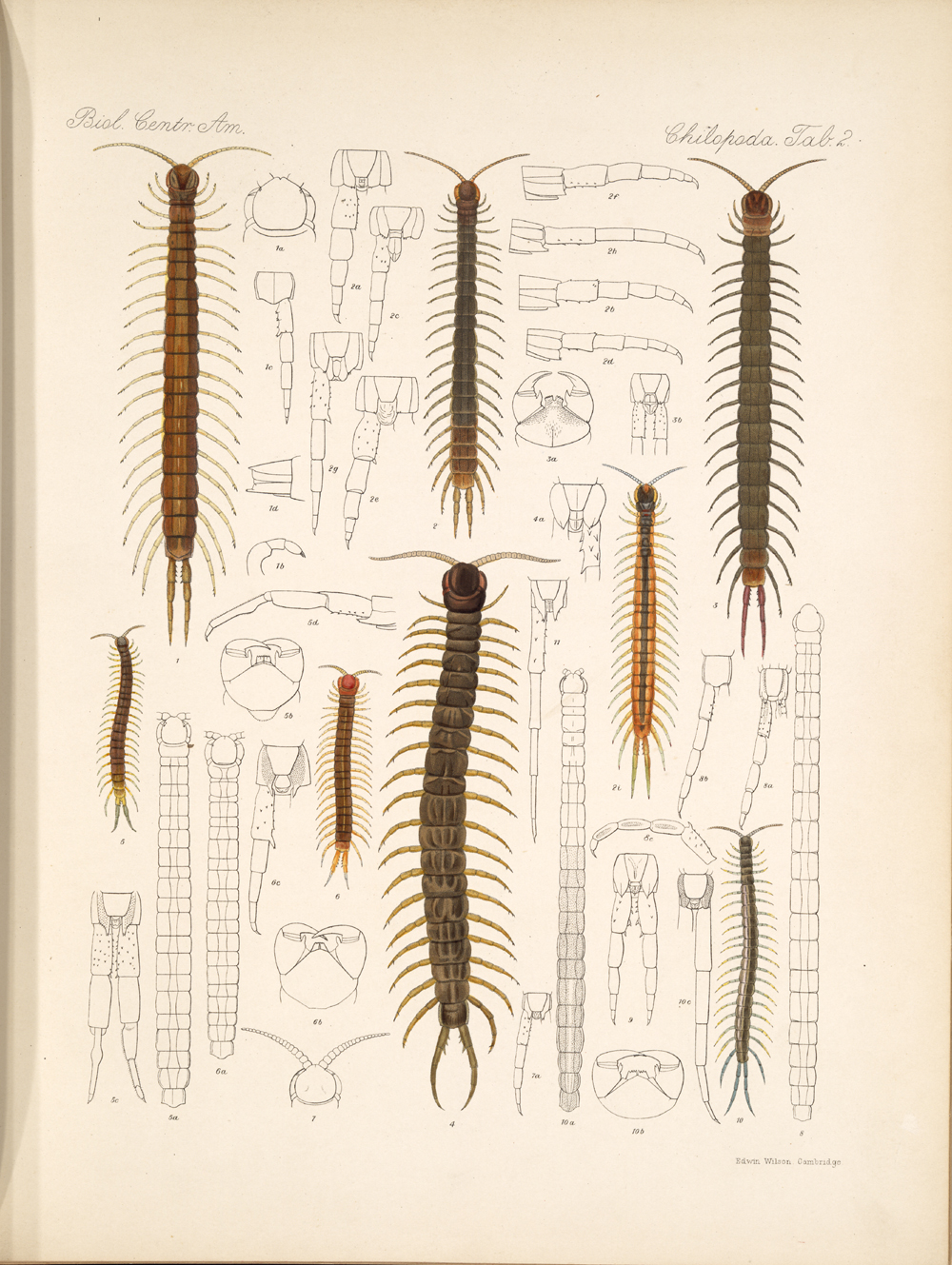 Centipedes and Millipedes,  Image number:bca_11_00_00_230