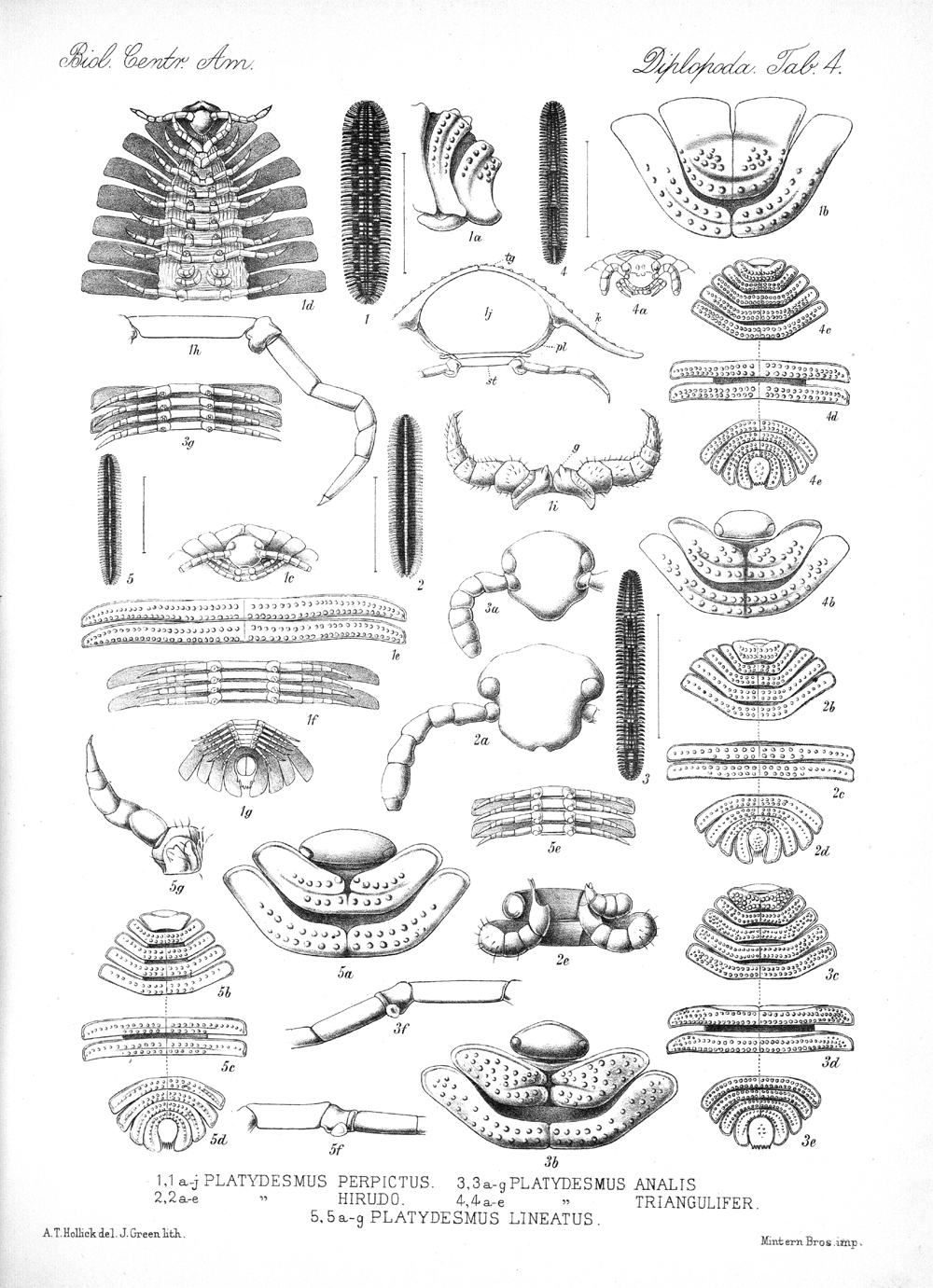 Centipedes and Millipedes,  Image number:bca_11_00_00_234