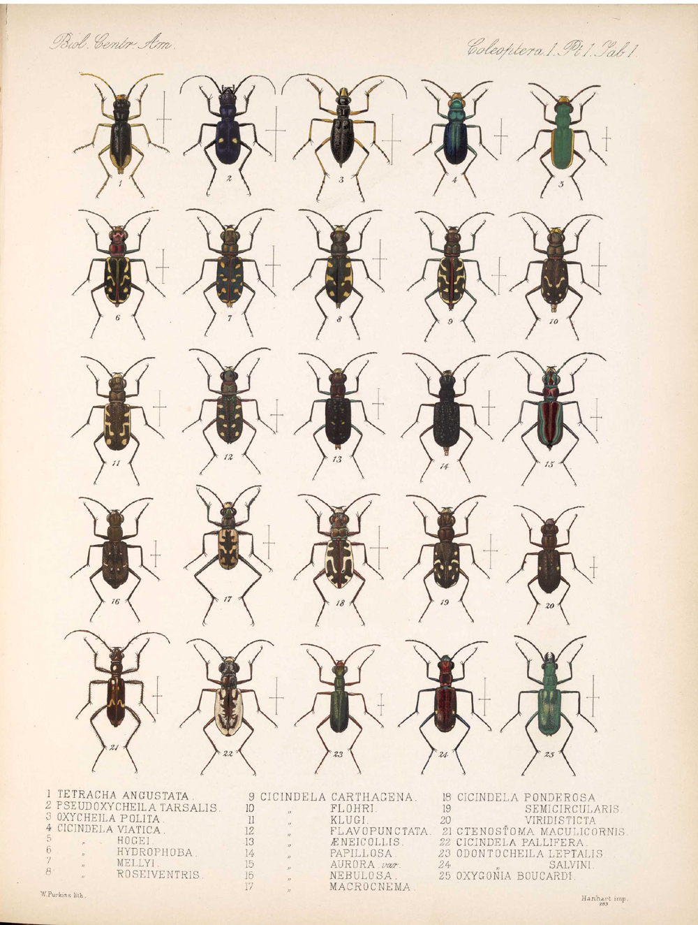 Beetles,  Image number:bca_12_01_01_333