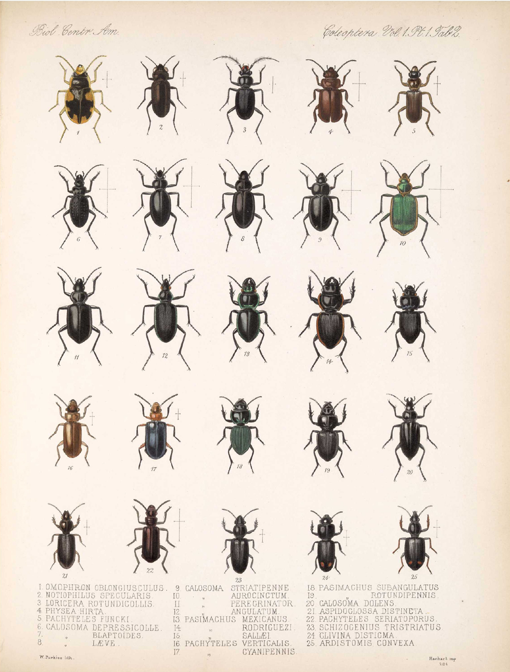 Beetles,  Image number:bca_12_01_01_334